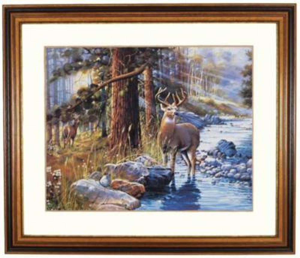 Buck In Stream Picture