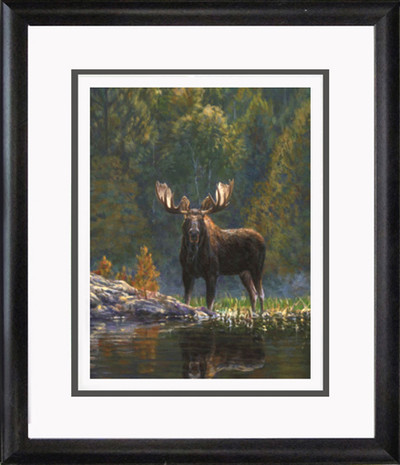 North Country Moose Picture