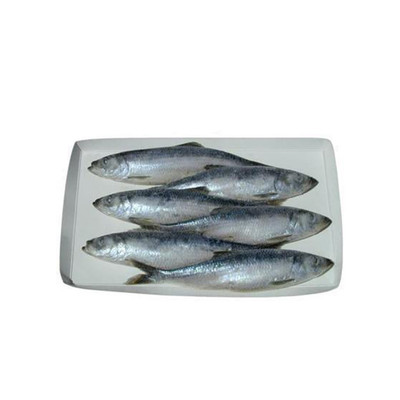 Frozen Herring 8-9 inch Large, Purple - 6 Pack