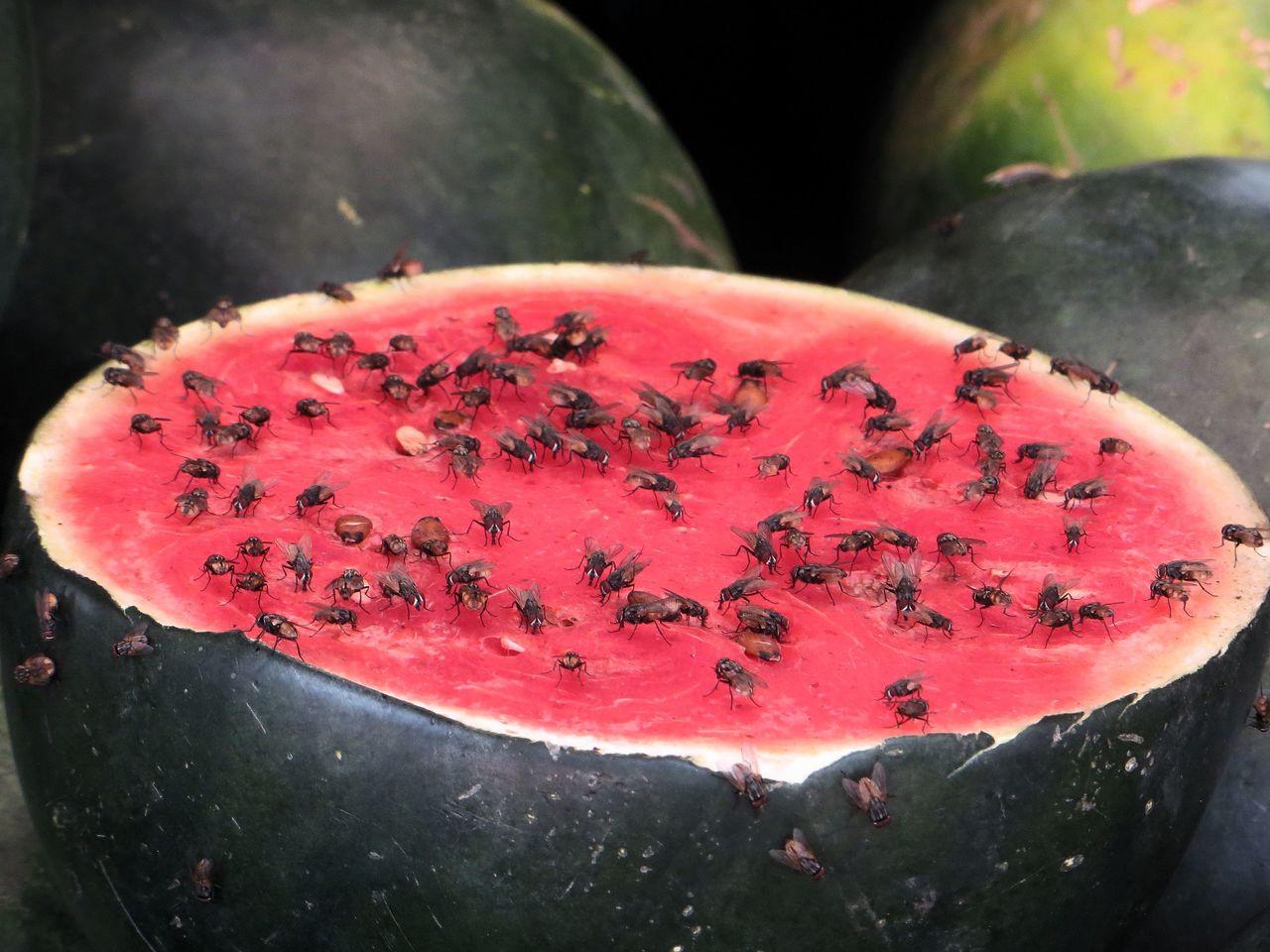 Oddest Watermelon. Dar es Salaam, Tanzania.  Signed and framed.