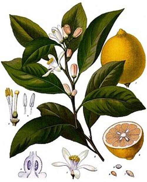 Italian Lemon Essential Oil, 5 mL