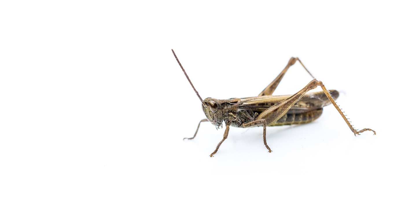 Live Crickets & Other Insects