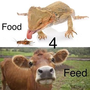 food-4-feed-s.jpg