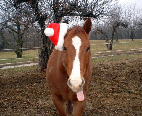 ​Gifts For Your Horse