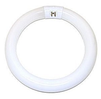 FC8T5CW 22W T5 Circline 4-pin Fluorescent Lamp 4100K