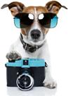 Hottest Dog Contest Winner