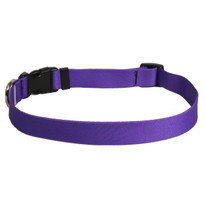 Solid Purple Dog Collar