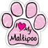I Love My Maltipoo PINK Scribble Paw Magnet