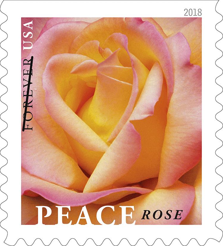 Peace Rose Stamp