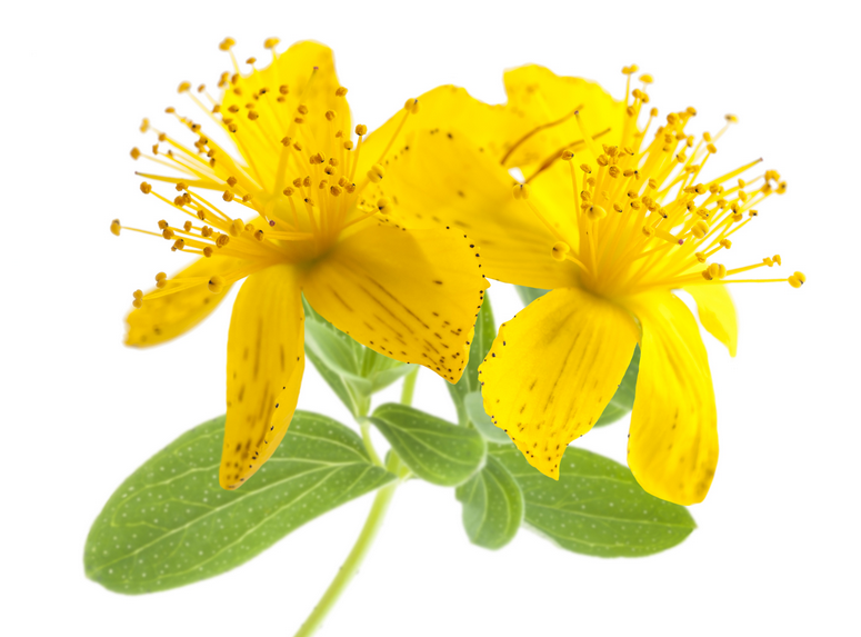 st-johns-wort.png