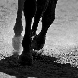 Hooves Moving BW