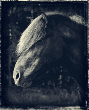 Horse Old Style