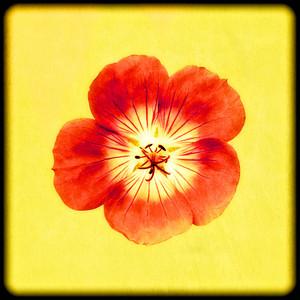 Framed Flower No 3