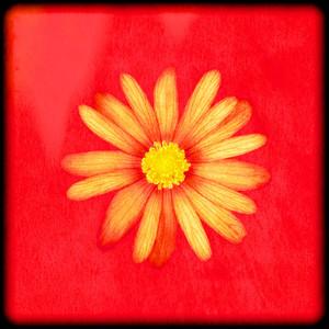 Framed Flower No 2
