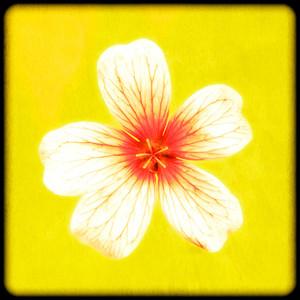 Framed Flower No 1