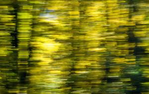 Blurred Trees II