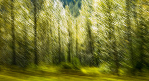 Blurred Trees I
