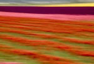 Blurred Flowers II