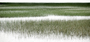 Coastal Marshlands