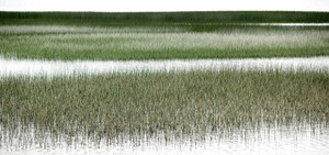 Coastal Marshlands B