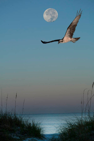 Osprey's Moon