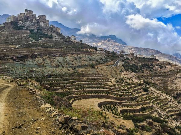 Introducing Yemen Mocca Haimi LTD