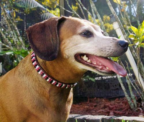 Fashionista Pet Collar
