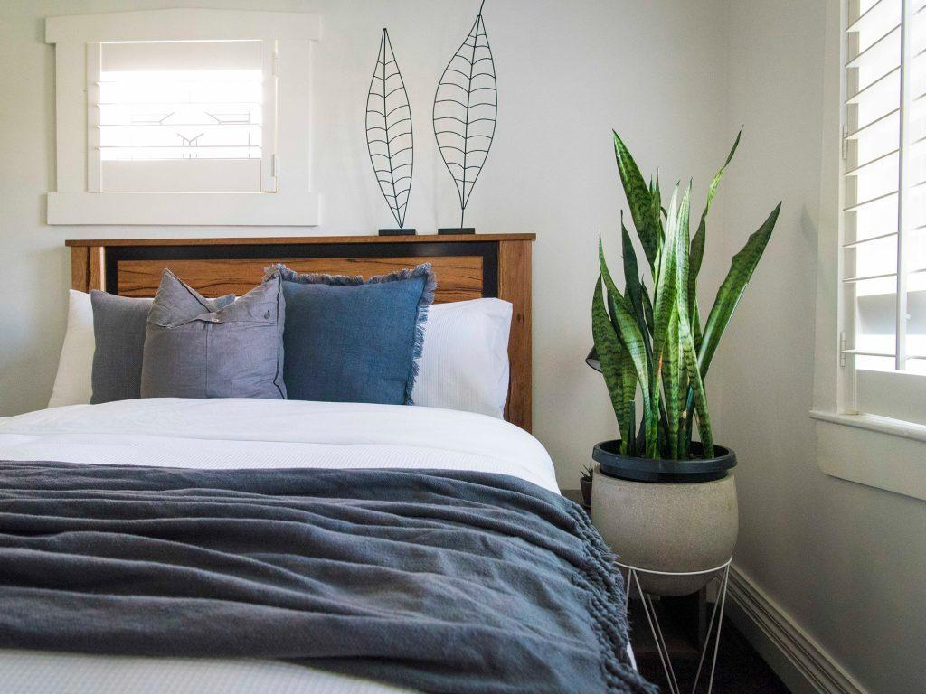 Best Plants for Your Bedroom to Help You Sleep