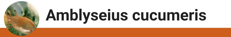 amblyseius-cucumeris.png