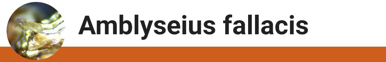 amblyseius-fallacis.png