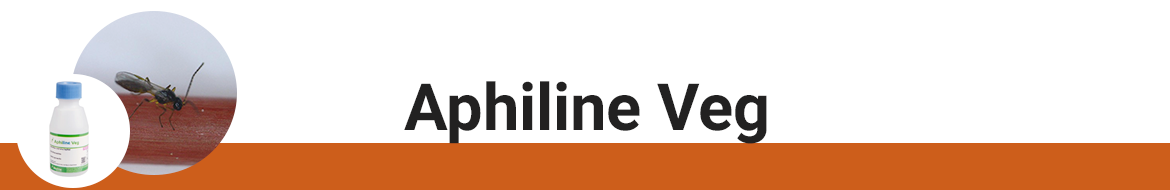 aphiline-veg.png