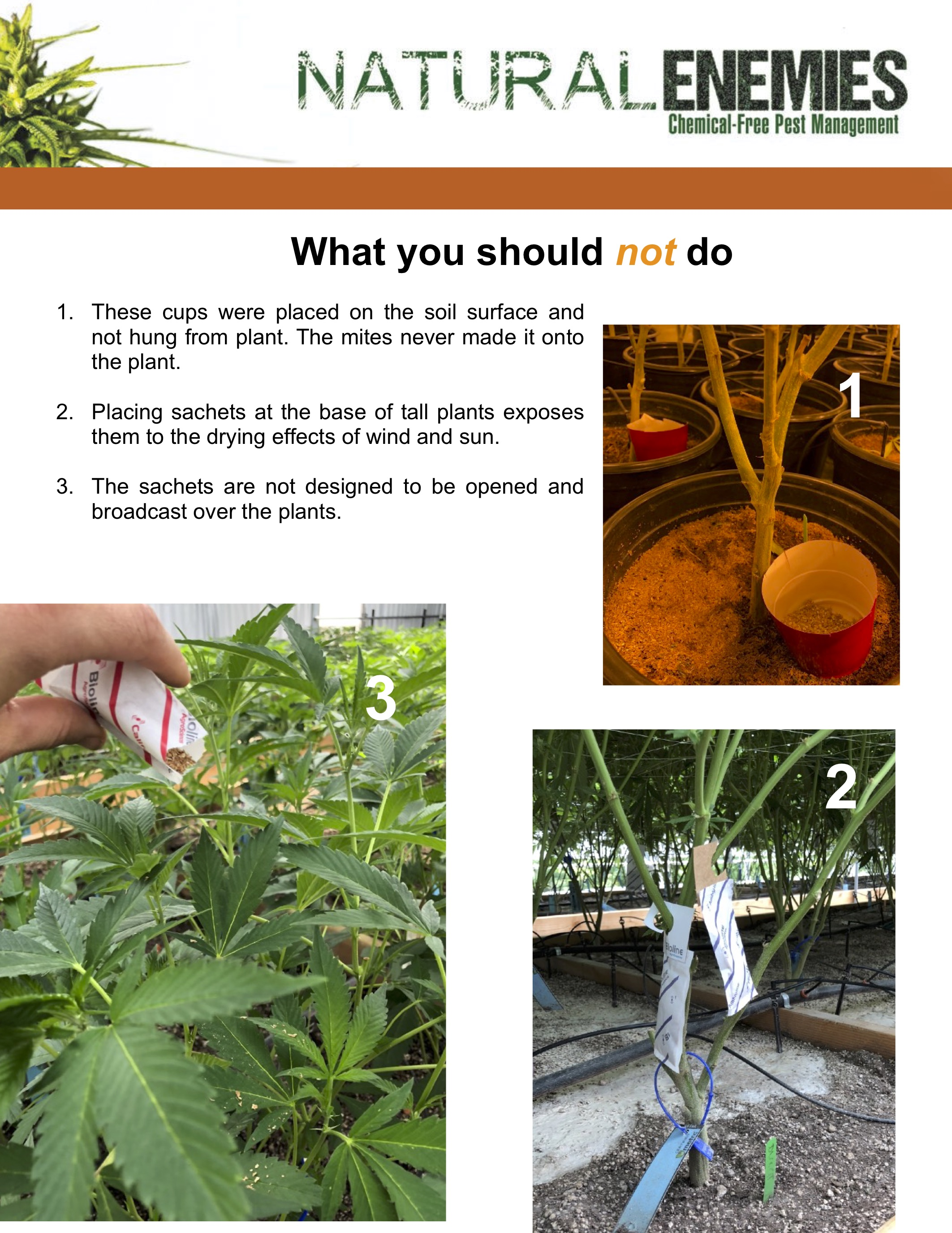 application-directions-for-mites-what-not-to-do.jpg
