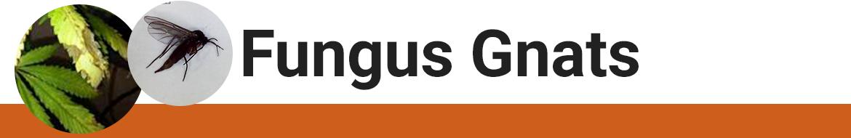Treat Fungus Gnats