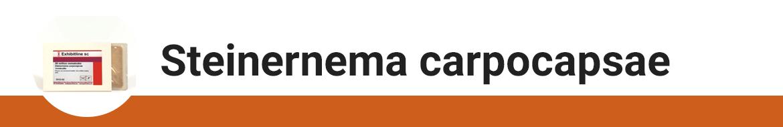 steinernema-carpocapsae.png