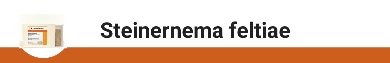 steinernema-feltiae.png