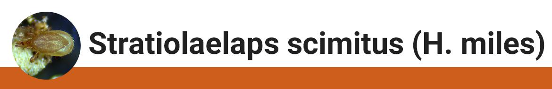 stratiolaelaps-scimitus-h.-miles-category.png
