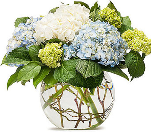 Mighty Hydrangea - ON SALE!!!