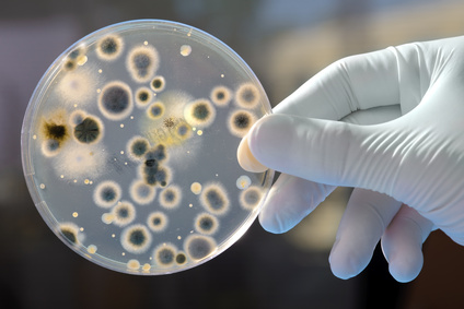 bacteria-growth-petri-dish-phases-for-survival.jpg