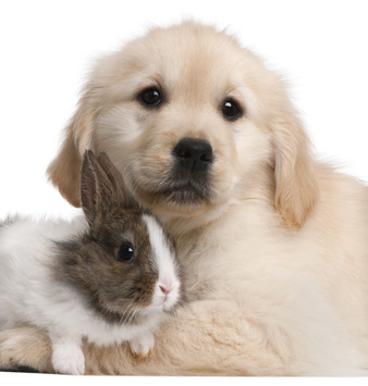 puppy-baby-rabbit-snuggle-cruelty-free-makeup-brushes.jpg