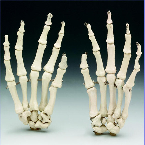 Skeleton Hand - Haunted House Creations