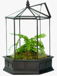 H Potter Six Sided Terrarium Wardian Case