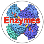 enzyme-image.png