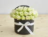 The little black dress of the flower world. Our ever stylish signature black hatbox - filled with gorgeous white 'Athena' roses tinted with a natural, springlike green hue.