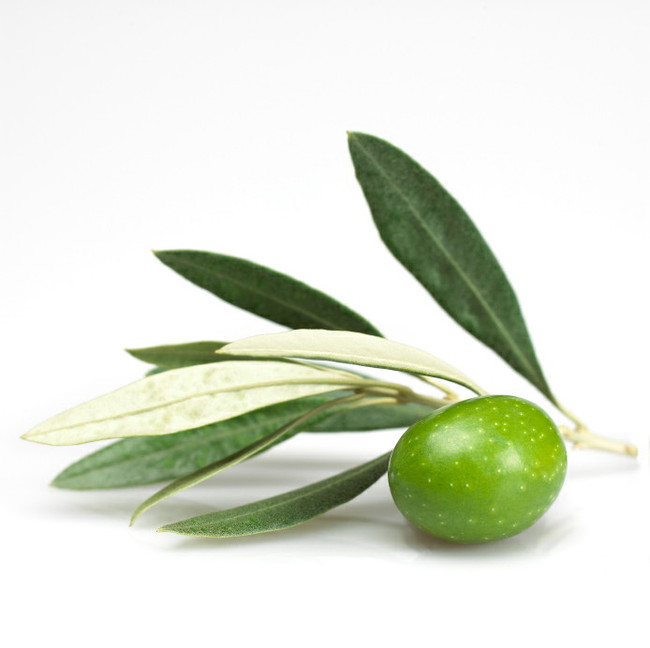 Amazing Olive Leaf!