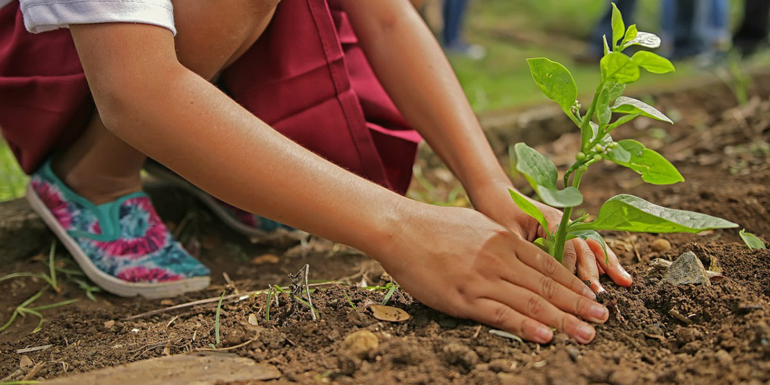 Tips for Starting Your Garden in Northeast Ohio
