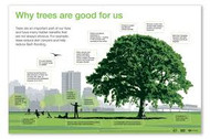 Trees Equipped with Life-Saving Health Benefits