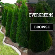 ​The Best Online Plants Nursery