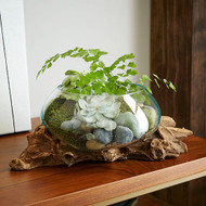 The Advantages Of Terrarium  Driftwood