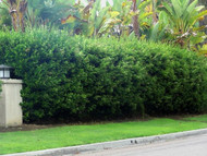 Beautify Your Landscape With a Privacy Hedge