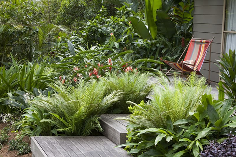 Beautiful fern gardens